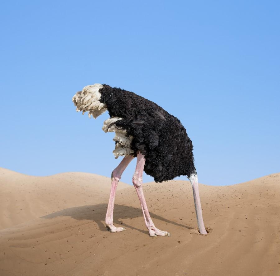 The Ostrich Market