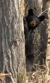 3 Bear Market Preparation Steps Advisors Need to Take Today